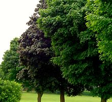 Elegance of Trees  (Municipal Green # 2) by goddarb