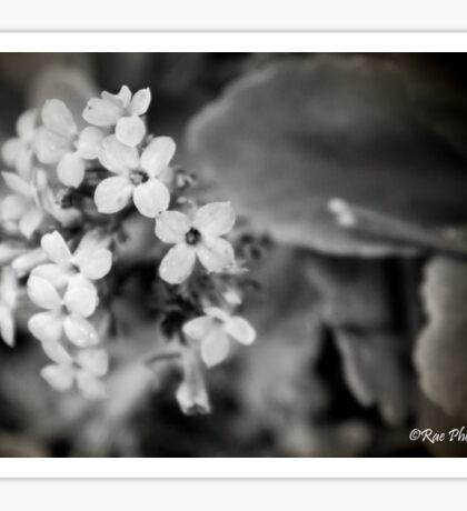Little Flowers Sticker
