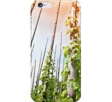 Hops iPhone Case/Skin