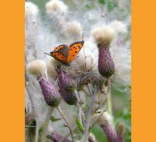 Orange Butterfly . Unisex T-Shirt