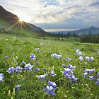Colorado Wildflower Images - Columbine at Lower Ice Lakes Basin 1 by RobGreebonPhoto