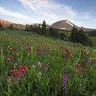 Colorado Wildflower Images - Morning at Butler Gulch along the Continental Divide 1 by RobGreebonPhoto
