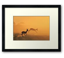 Springbok - African Wildlife Background - Beautiful Motion Framed Print