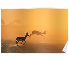 Springbok - African Wildlife Background - Beautiful Motion Poster