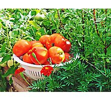 Garden Goodies Photographic Print