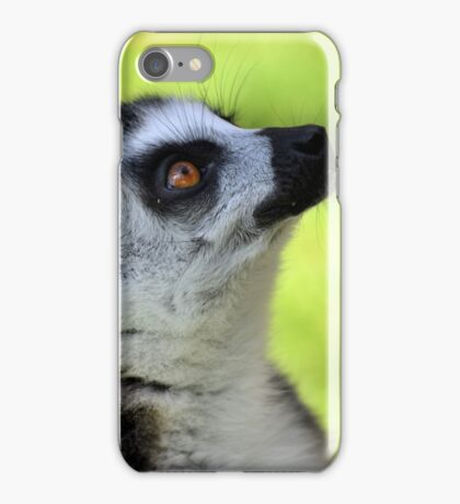 Ring-tailed Lemur iPhone Case/Skin