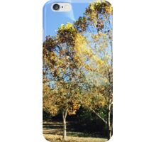Autumn Changes Amongst the Trees iPhone Case/Skin