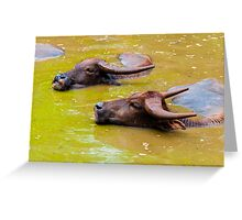 Herd of Thai buffalo cooling in during the day Greeting Card