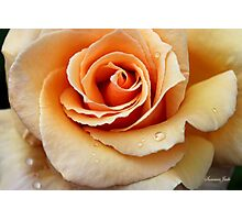 Whiskey Rose ~ Smoky and Sensuous Photographic Print