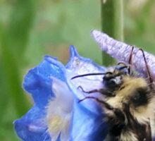 buzz buzz Sticker