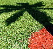 Palm Tree Shadow on Grass by kfisi