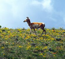 Enjoying The Wild Flowers by Gary Benson