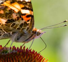Painted Lady Butterfly V Sticker