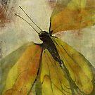 Monarch by Jing3011