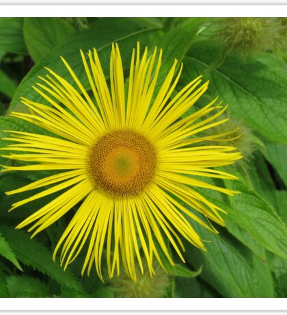 Yellow bloom Sticker