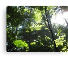 NC Trees Canvas Print