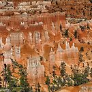 The Hoodoos of Bryce Canyon  by John  Kapusta