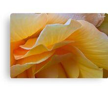 Begonia Macro Canvas Print