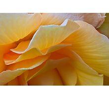 Begonia Macro Photographic Print