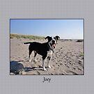 Joey by Lydia Marano