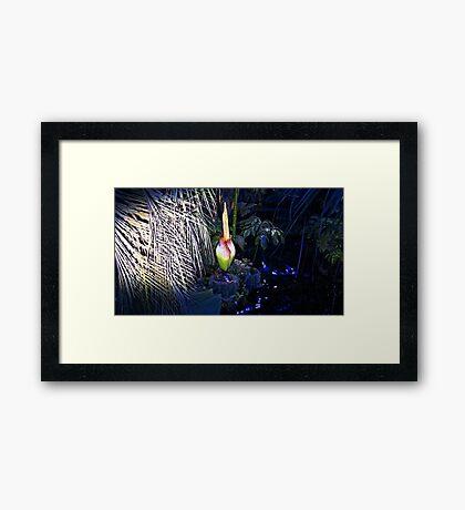 Midnight Corpse Flower Framed Print