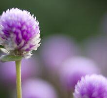 mini purple by ekochanphotos