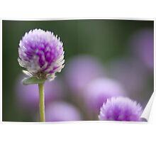 mini purple Poster