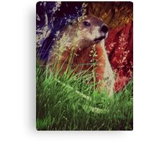 2015. Photography. By. Will Divinely Create/Animal_Groundhog Canvas Print