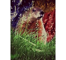 2015. Photography. By. Will Divinely Create/Animal_Groundhog Photographic Print