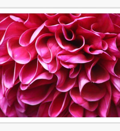Fuchsia Ruffle Petals Sticker
