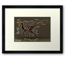 Velociraptor Skeleton Study Framed Print