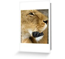 723 lioness Greeting Card