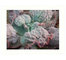 """Echeveria Gibbiflora (a """"Unique"""" Type!) Art Print"""
