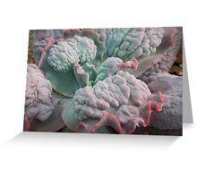 "Echeveria Gibbiflora (a ""Unique"" Type!) Greeting Card"