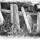 Bird On The Fence by CarolM