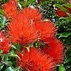 New Zealand Christmas tree flowers by Margaret  Hyde