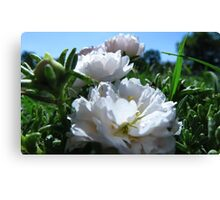 MOSS ROSE FROM A BUG'S EYE VIEW Canvas Print