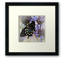 Drying his wings Framed Print