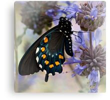 Drying his wings Canvas Print