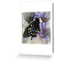 Drying his wings Greeting Card