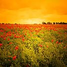MY BEAUTIFUL POPPY FIELD by leonie7