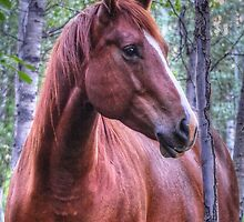 Red Flame (Sorrel Mare Portrait for Horse-lovers) by Skye Ryan-Evans