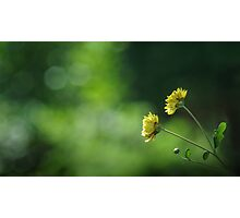 Yellow flower in the sunlight Photographic Print