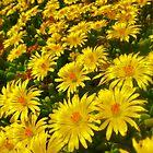 """Field of Sunny Smiles"" by AlexandraZloto"