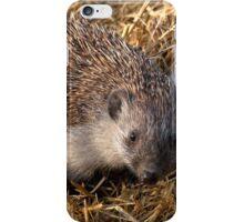 European Hedgehog iPhone Case/Skin