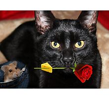 THE CAT & THE ROSE-THE ROSE HOLDING BAIT..THE MOUSE SITS HOPING IT DROPS  WHILE HE WAITS. Photographic Print