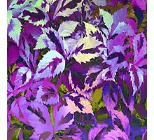 More Lovely Leaves, Purple Shades Photographic Print