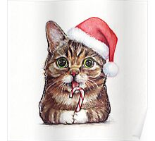 Lil Bub Funny Cat Portrait Poster