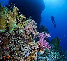 Underwaterworld - Habili Etnin Arug  by Henry Jager