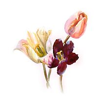 Watercolor tulips Photographic Print